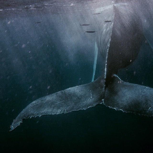 Leviathan #whale